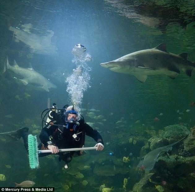 pulitori vetri squali