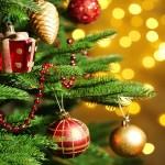 natale 2015, albero di natale, 8 dicembre albero di natale, origini albero di natale, albero di natale 2015,