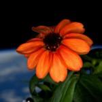 primo fiore spazio