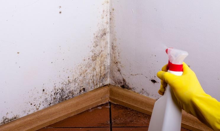 Muffa in casa stop rimedi naturali per toglierla da muri - Rimedi per le formiche in casa ...