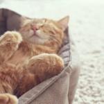 giornata mondiale gatto
