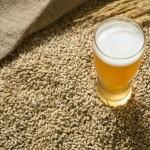 diserbante nelle birre tedesche, diserbante nella birra, diserbante glifosate, marche birra con diserbante, marche birra con erbicida,