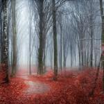fotografie foreste