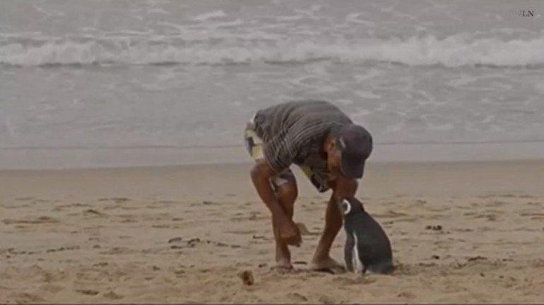 Pinguino pescatore brasile