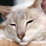gatto spedito