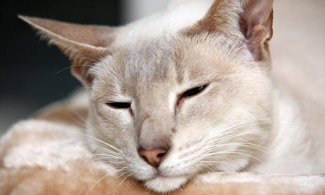 YOUTUBE Gatto in scatola spedito via posta. Per sbaglio…