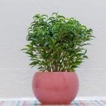 piante che purificano l'aria, piante che purificano l'aria in casa, piante che purificano l'aria in ufficio, piante da appartamento, piante che puliscono aria, piante combattono elettrosmog,