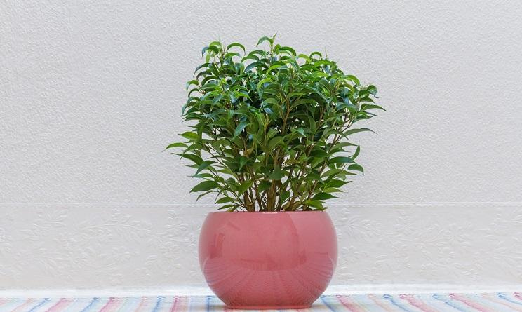 5 piante che purificano l 39 aria di casa combattono l for Solo piante