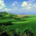 70 stage nella green economy
