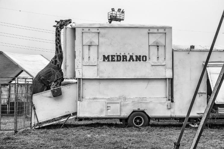 eventi gratis milano photofestival 2016