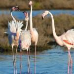 Birdwatching e turismo naturalistico fiera a Comacchio