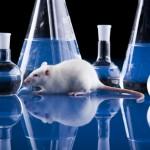 giornata mondiale animali laboratorio