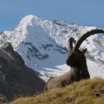parchi nazionali italia