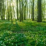 Parchi naturali in Lombardia