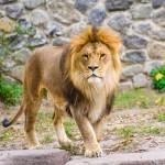 leone cile suicidio