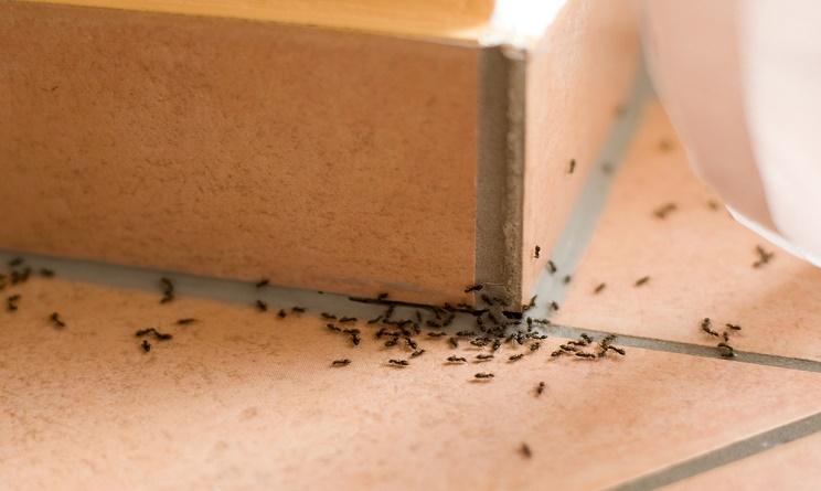 formiche in casa, formiche in cucina, formiche a casa, formiche a casa cosa fare, come eliminare le formiche da casa, come allontanare le formiche da casa, come combattere le formiche in casa,