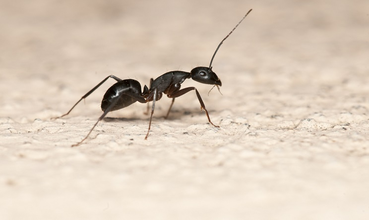 Formiche In Casa Cause E Rimedi Naturali Per Tenerle Lontane