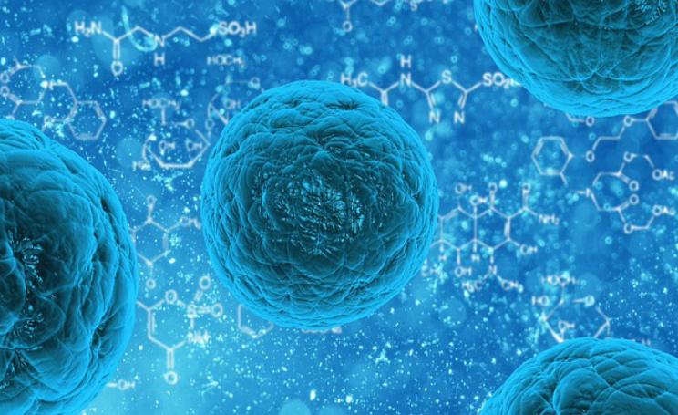 Cellule staminali terapia