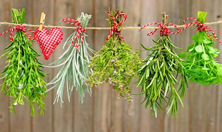 Come essiccare le erbe aromatiche timo rosmarino - Erbe aromatiche in casa ...