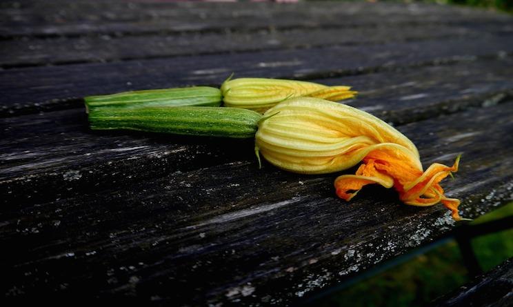 Ricette estive veloci involtini di zucchine urbanpost for Cucinare qualcosa di veloce