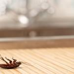 insetti in casa, insetti in casa come eliminarli, insetti in casa come allontanarli, rimedi naturali insetti in casa, metodi naturali insetti in casa, formiche in casa, mosche in casa,