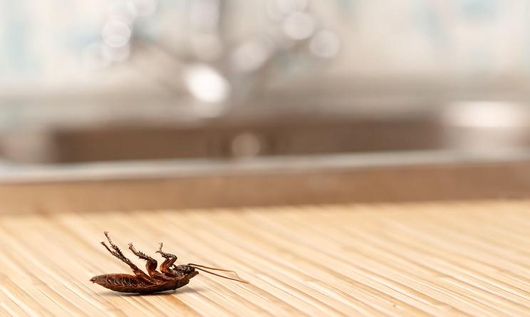 Insetti in casa come eliminarli con metodi naturali urbanpost - Rimedi per le formiche in casa ...