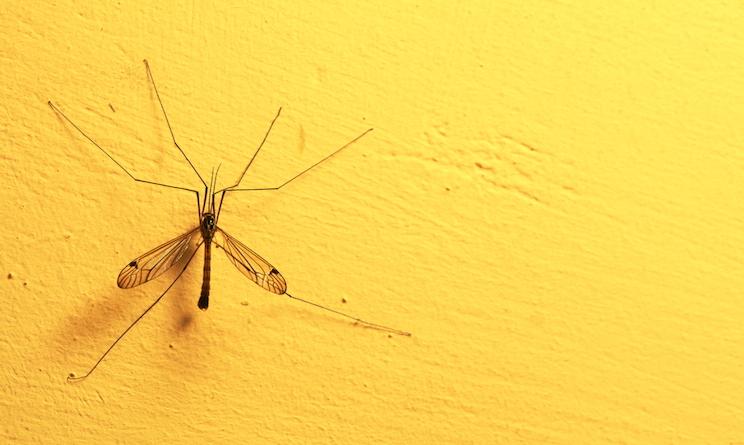 rimedi naturali zanzare
