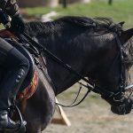 Olimpiadi Rio 2016 orario equitazione