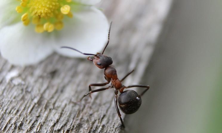 formiche in casa, formiche in casa rimedi, formiche in casa rimedi naturali, formiche in casa rimedi fai da te, formiche rimedi naturali, formiche in casa cosa fare