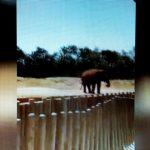 marocco tragedia allo zoo