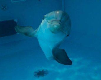 Programmi tv stasera 27 Agosto: Castrocaro 2016 e L'incredibile storia di Winter il delfino 2
