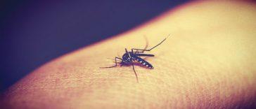 MALARIA CONTAGIO NEWS