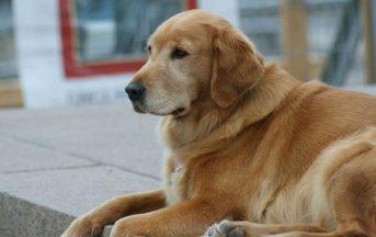 """Rimini, hotel rifiuta cieco con cane guida: l'albergo è """"pet free"""", ma il Comune pretende scuse"""