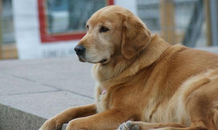 Hotel a Rimini rifiuta cieco con cane guida