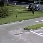 video cane abbandonato in strada