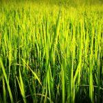 bando startup agricole emilia romagna