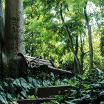 Giardini privati aperti al pubblico a Ferrara