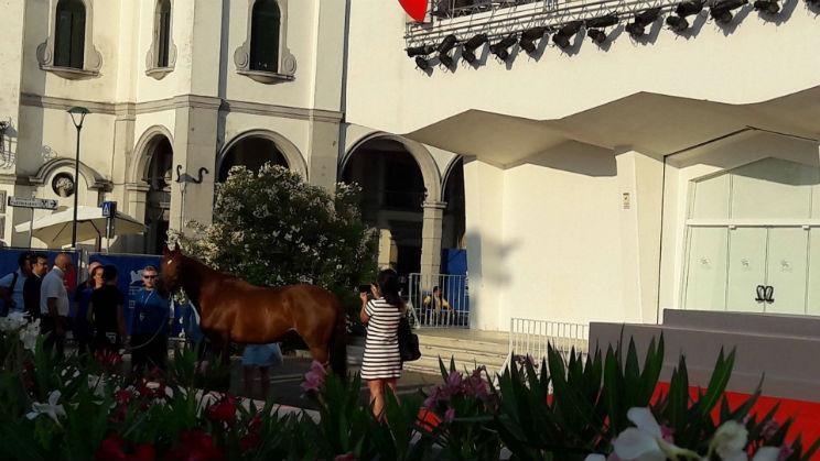 venezia 73 cavallo red carpet