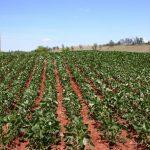 Voucher cosa cambia con tracciabilità e per il settore agricolo