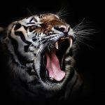 denti gengive rimedi naturali