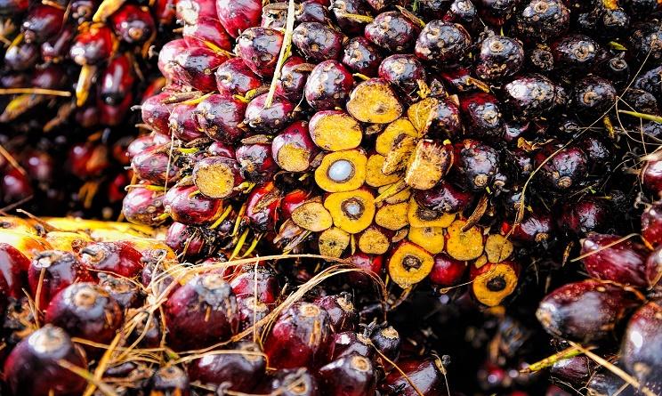 Olio di palma, i rischi per salute ed ambiente