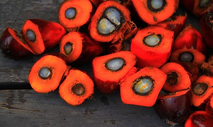 Olio di palma: mozione in Regione per vietarlo nelle strutture pubbliche
