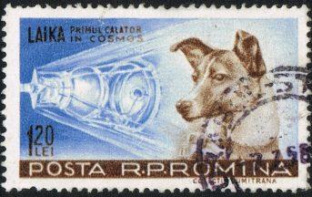 Accadde Oggi, il 3 Novembre 1957 moriva Laika: tra Guerra Fredda e proteste popolari, il dibattito è ancora acceso
