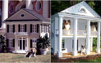 Case di lusso per cani: quando l'amico a 4 zampe ha una casa più bella della tua