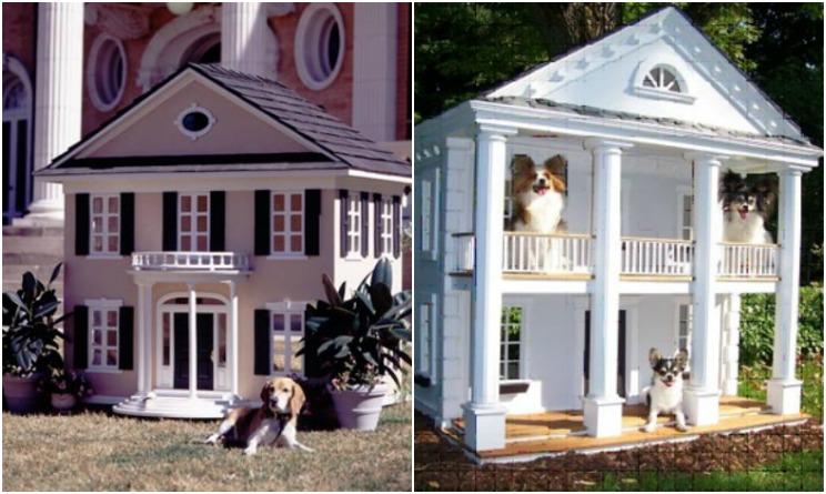 case di lusso per cani, case di lusso cani, case di lusso animali domestici,