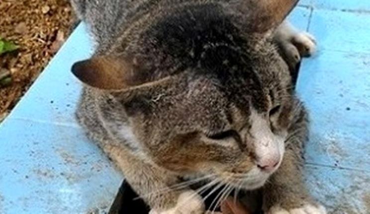 giava gatto in cimitero