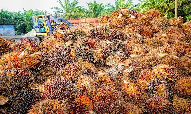 olio di palma fa male alla salute, olio di palma fa bene o male, olio di palma dove si trova, olio di palma nocivo, olio di palma coop, olio di palma nutella,