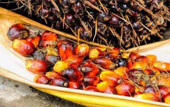 Olio di palma sostenibile e segregato: cos'è e chi lo utilizza