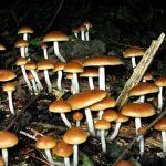 Attacchi di panico funghi allucinogeni curano ansia e depressione