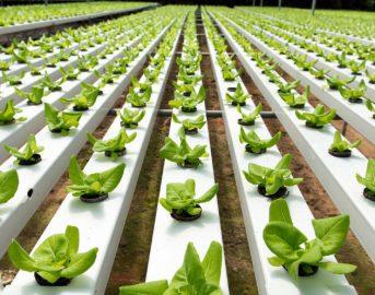 Innovazione, a Milano un incubatore per startup agroalimentari: ecco OpenAgri